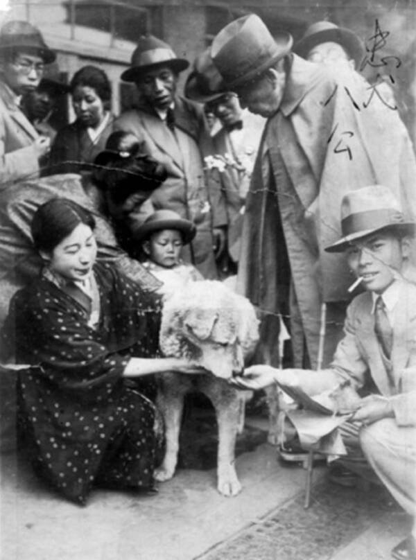 Hachiko Being Pet By A Crowd