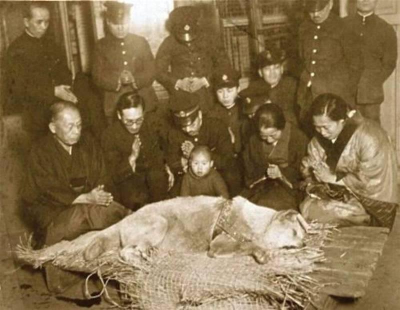 Hachiko mort
