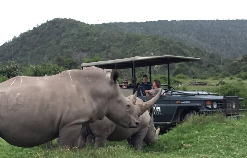 Rinoceronti alla riserva di caccia di Sibuya