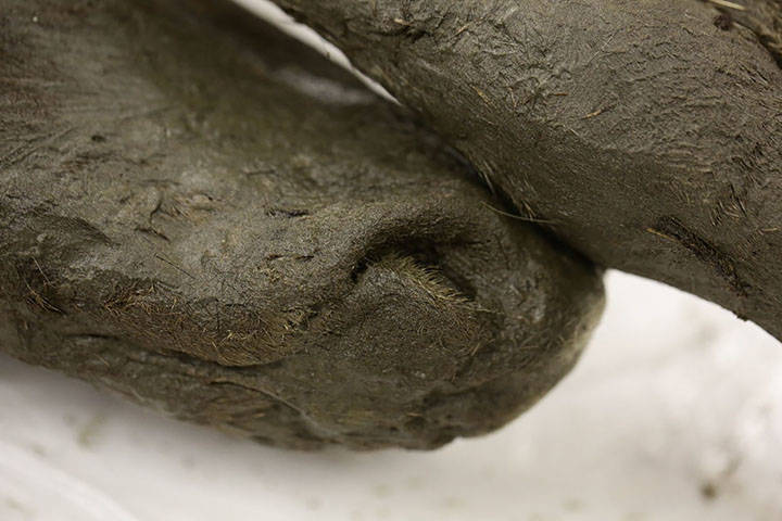 Foal Nose
