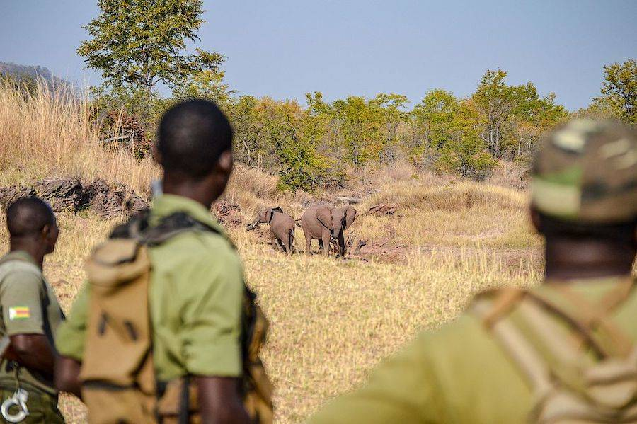 Wildlife Poachers In Kenya Could Face The Death Penalty
