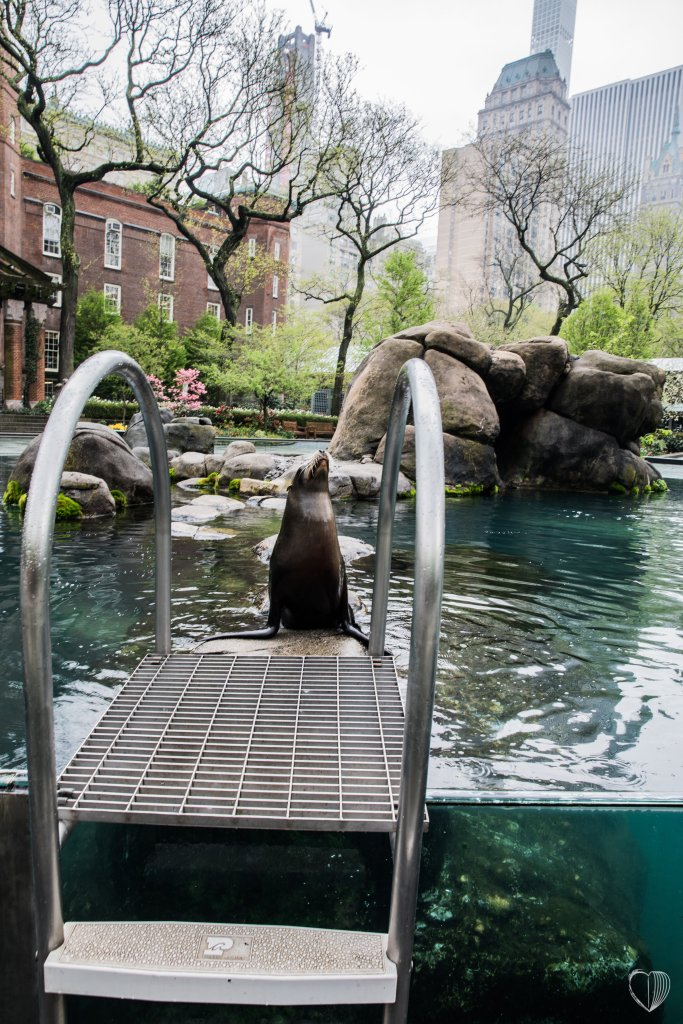 Central Park Zoo with the Wildlife Conservation Society