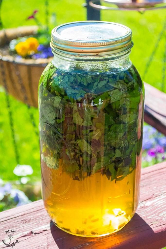 How to Make Fresh Mint Sun Tea (just water, fresh mint, & sunshine!)