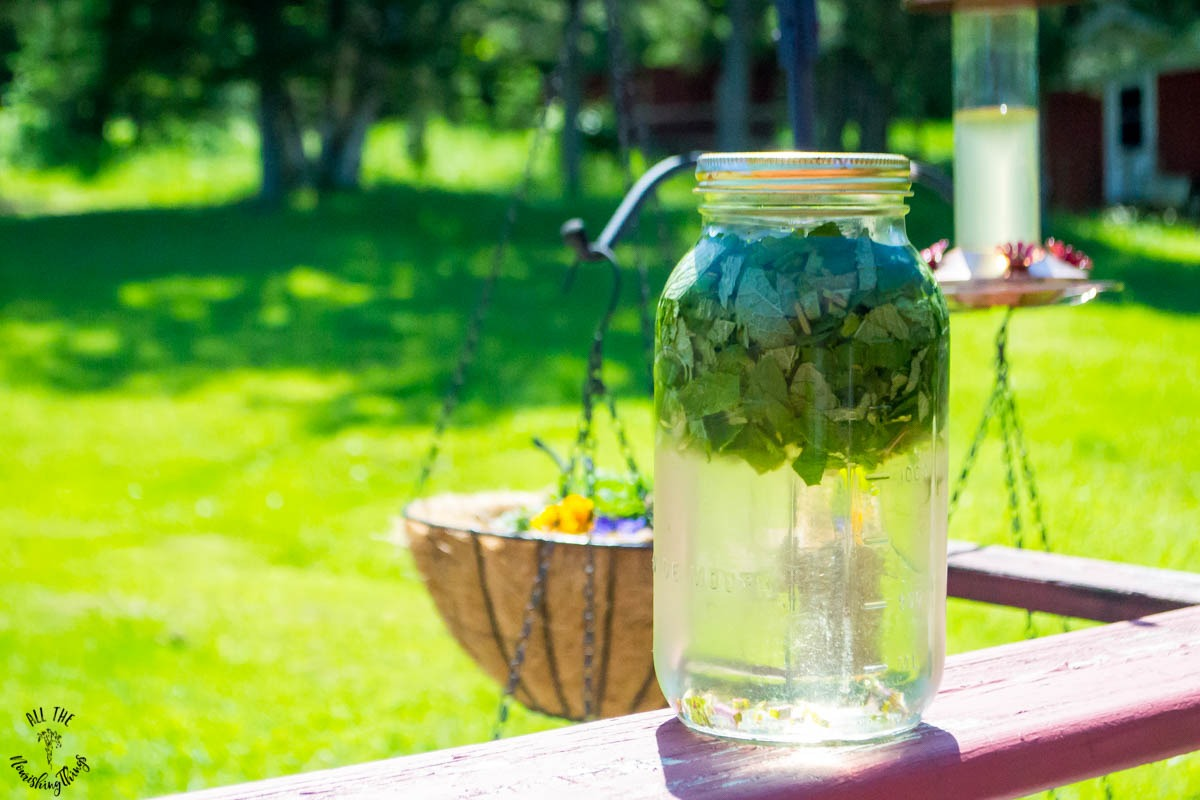 water and peppermint leaves in a jar sitting in the sun