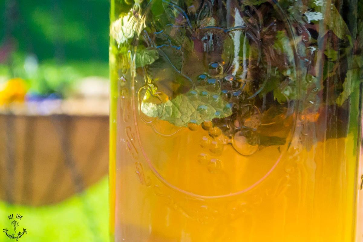 fresh mint sun tea