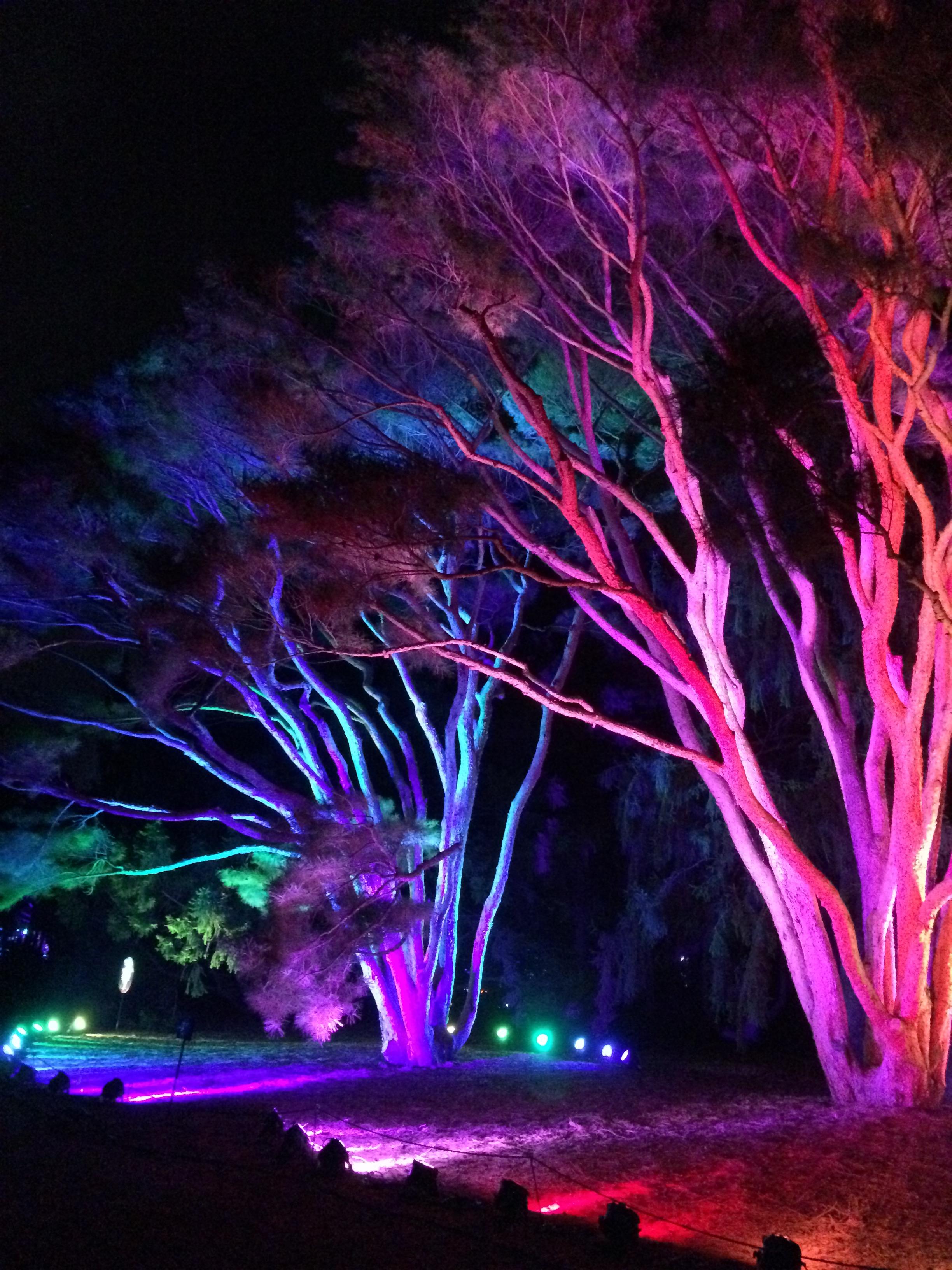 Holiday Magic is in the Air:  'Illumination' light show at Morton Arboretum, Lisle IL