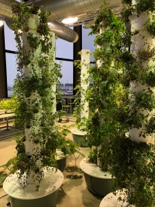 Sustainable greens are grown in the world's first aeroponic garden in an airport at O'Hare International Airport in Chicago. Photo by Pamela McKuen