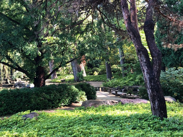 A grouping of trees creates a shady area for groundcover plants