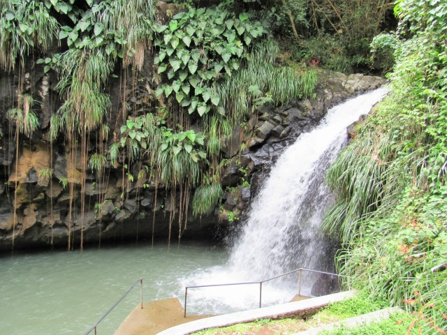 A waterfall flanked by tropical foliage