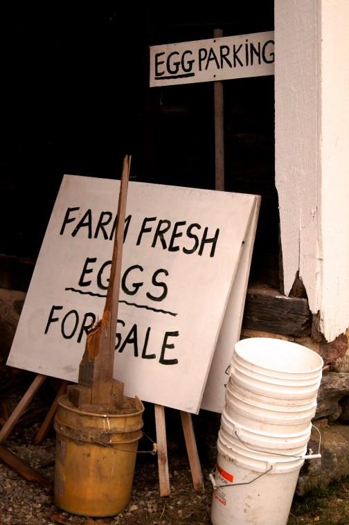 fresh yolks