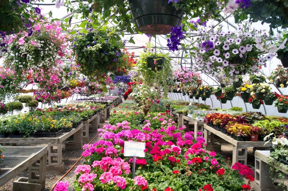 so. many. flowers. Canaan Farm.