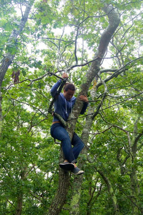 saving the day, one tree climb at a time