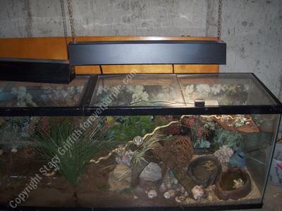 150 gallon hermit crab tank
