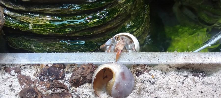 Ramona hiding in the salt water pool