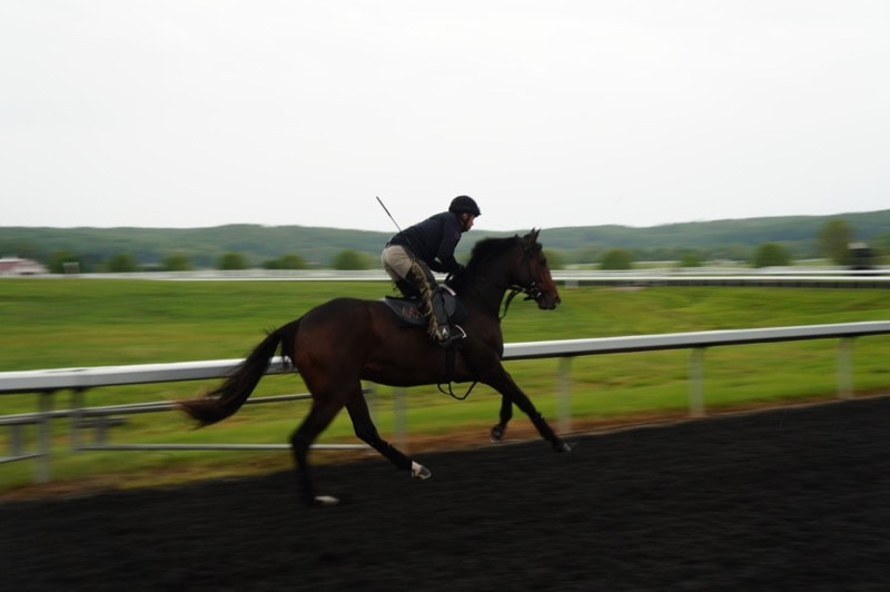 Tapeta All-Weather surface at Sagamore Farm