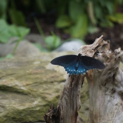 Butterflies are Free at the Hershey Gardens
