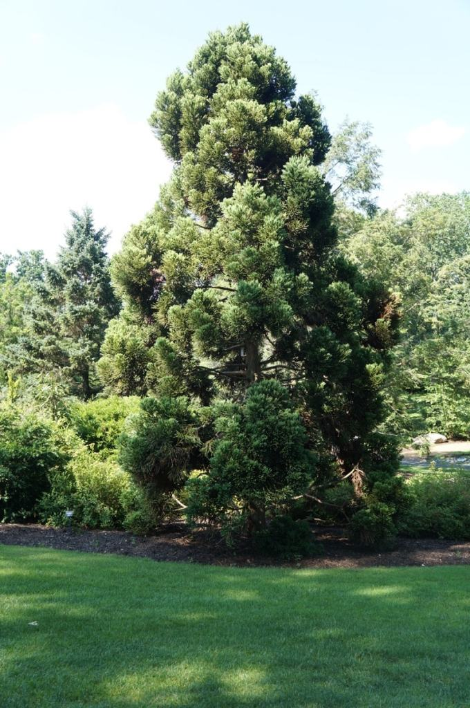 Dense Jade Mother Tree
