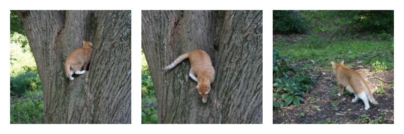 Resident cat at Hershey Gardens