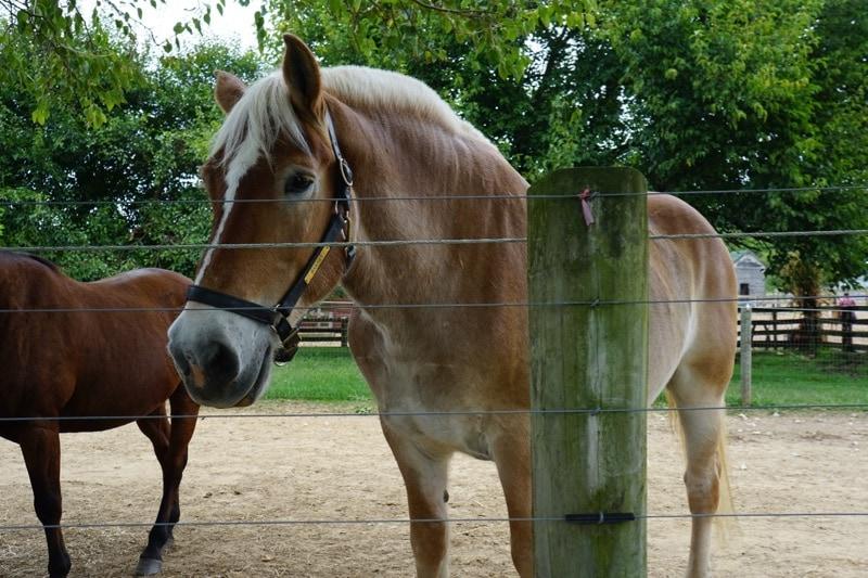Officer Barney - Days End Farm Horse Rescue