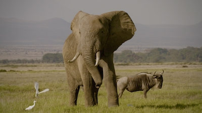 THE IVORY GAME documentary on Netflix