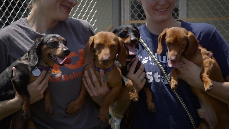 aspca-second-chance-dogs-graduation_day