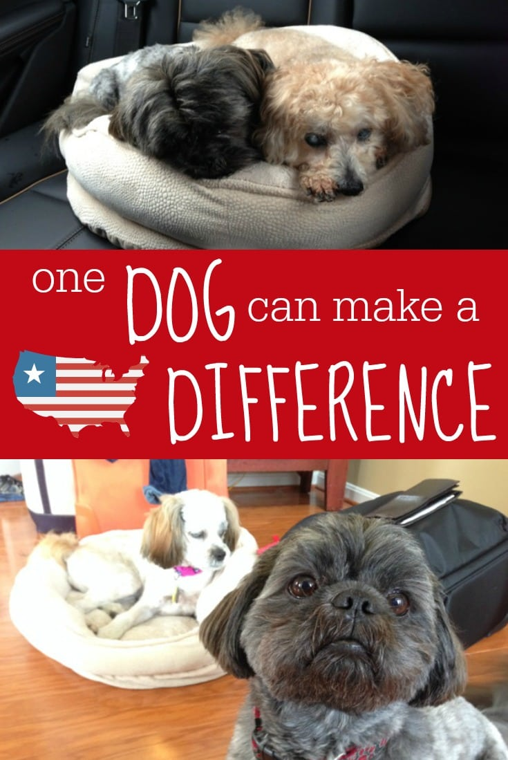 one-dog-can-make-a-difference