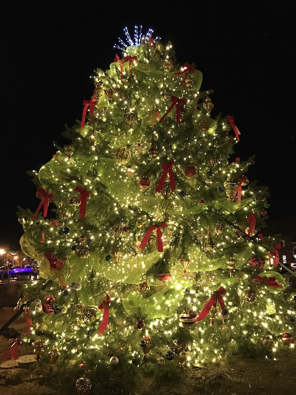 Christmas tree in Annapolis