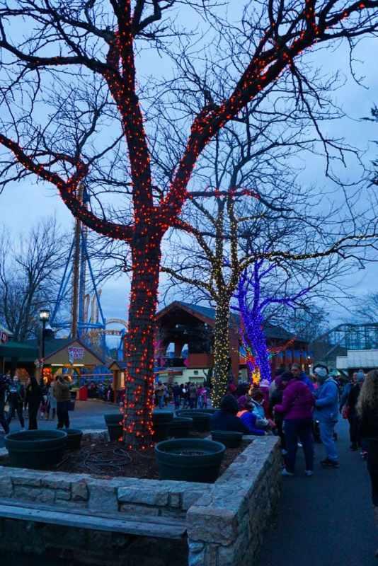 lit-up-trees