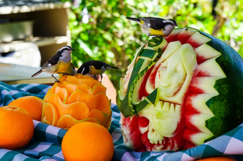 Birds and fruit - Castaway Cay