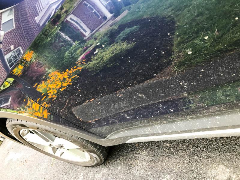 Hyundai Santa Fe - gardening evidence