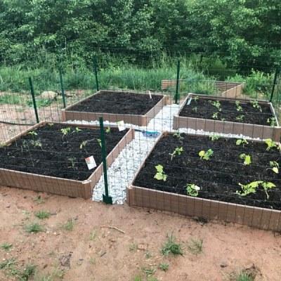 Backyard Gardening for Beginners (like me!)
