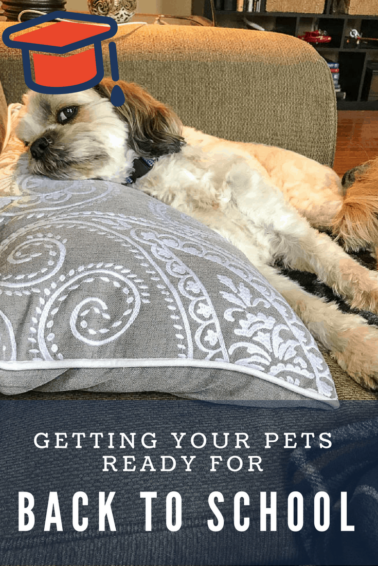 Back to School pets
