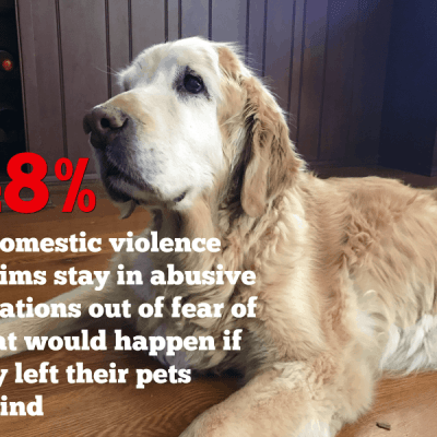 Would You Leave Your Pets Behind If…