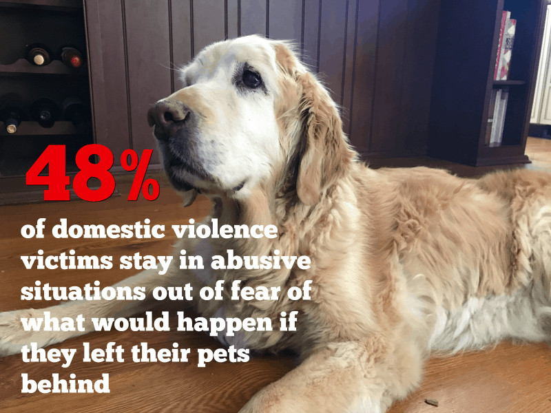 48% stay in abusive relationships