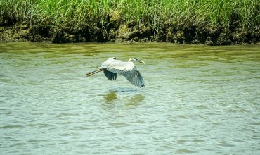 Bombay Hook is for the Birds (and Bird Lovers Like Me!)
