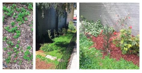 chelsea street playground gardens