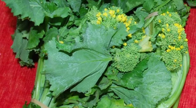 ONE OF MY FAVOURITE VEGETABLES – Cime di Rape