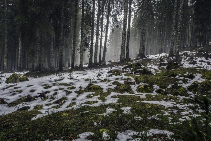 forest nature snow 4058
