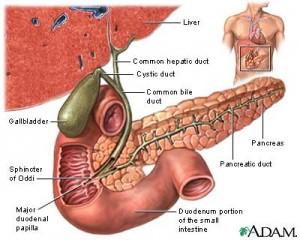 Gall bladder