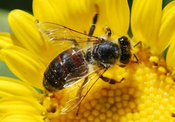 Bees Beat their Wings 270 Times