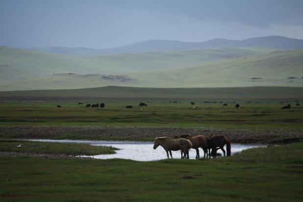 Монгольской Степи