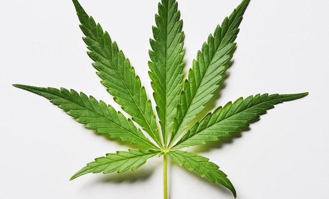 Is Nigeria Ready for Medical Marijuana