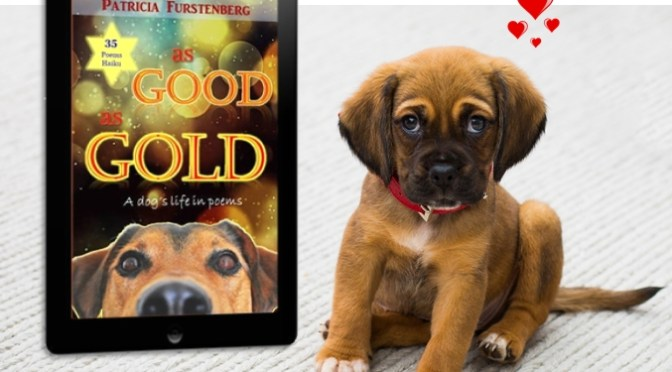 As Good as Gold Blog Tour, a Success #AsGoodASGold #BlogTour #humour #poetry #haiku #dogs @PatFurstenberg