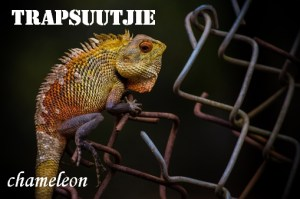 Trapsuutjie - step softly - chameleon