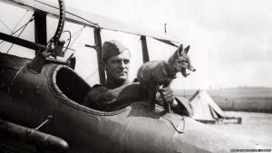 An RAF fox mascot sitting on a plane with the pilot during World War One. Source BBC