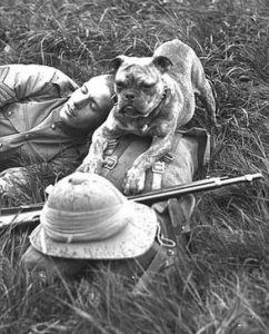A sentry dog watching after a soldier