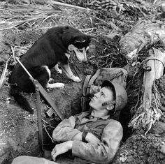 Amazing roles of dogs played during WW1. Part 1: dogs in trenches and ratter dogs