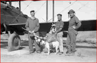 Paradogs, the Flying Dogs of War,  Jeff, the mascot of the 120th Colorado Air National Guard, the first dog to jump with a parachute. Source History Daily.