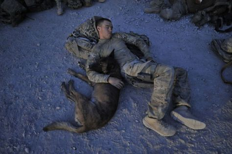 MWD watching and soldier sleeping