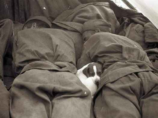 1945, Russia, a puppy sleeping between two soldiers